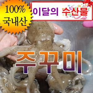 살아있는 주꾸미 1kg3만=>5천할인